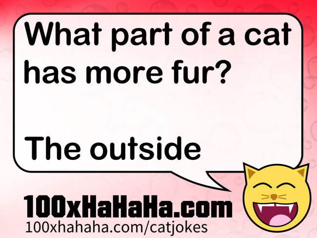 What part of a cat has more fur? / / The outside
