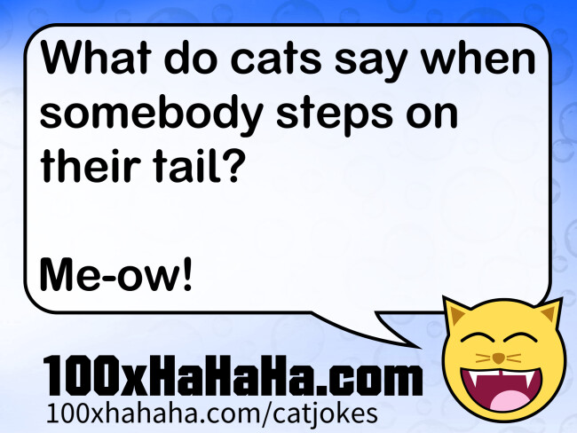 What do cats say when somebody steps on their tail? / / Me-ow!