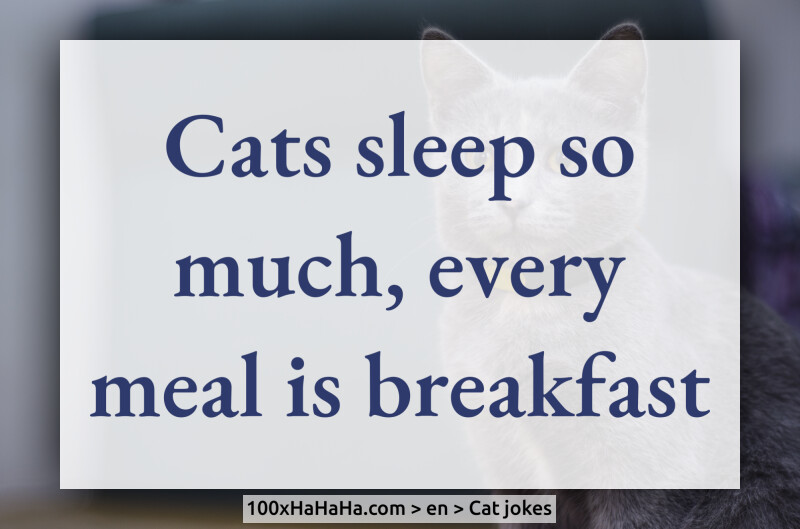 Cats sleep so much, every meal is breakfast