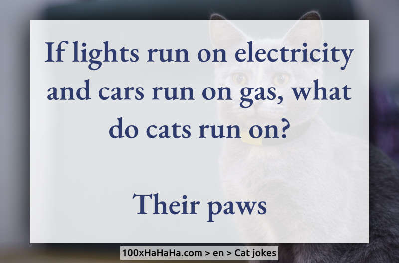 If lights run on electricity and cars run on gas, what do cats run on? / / Their paws