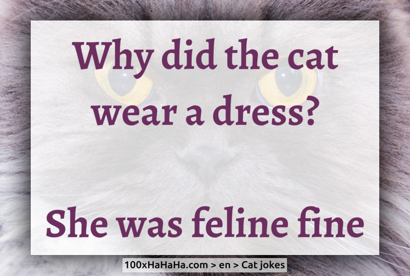 Why did the cat wear a dress? / / She was feline fine