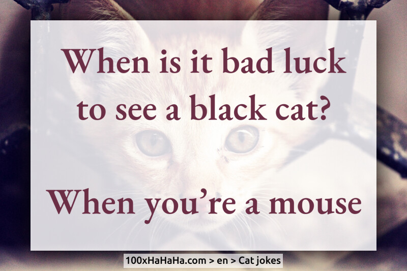 When is it bad luck to see a black cat? / / When you're a mouse
