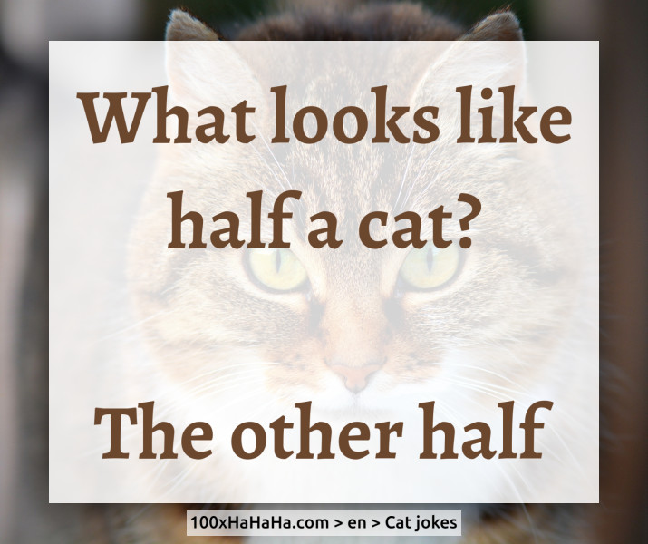 What looks like half a cat? / / The other half