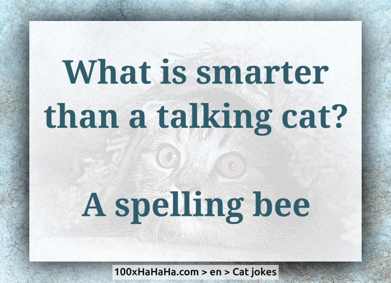 What is smarter than a talking cat? / / A spelling bee