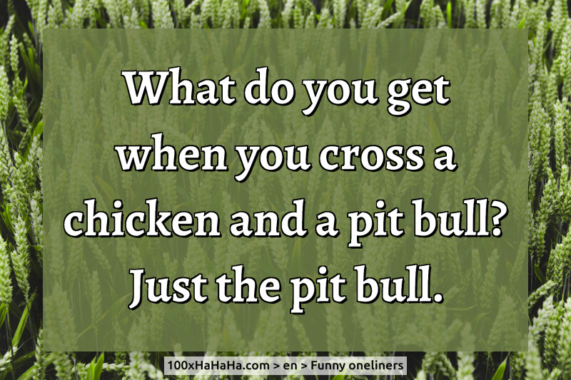 What do you get when you cross a chicken and a pit bull? Just the pit bull.