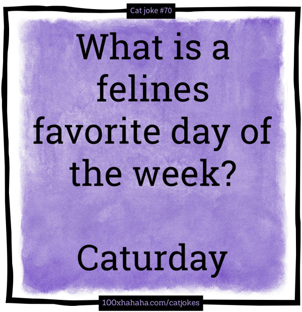 What is a felines favorite day of the week? / / Caturday