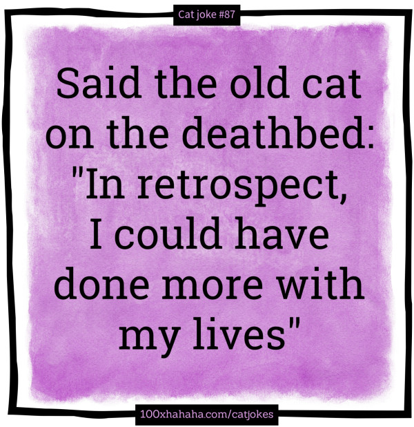 "Said the old cat on the deathbed: ""In retrospect, I could have done more with my lives"""