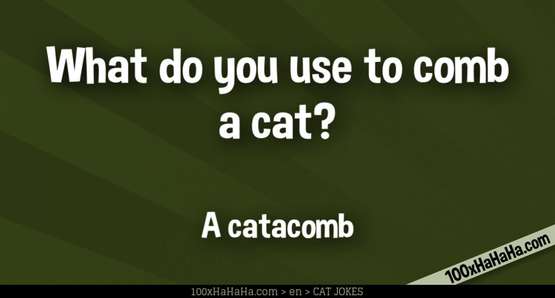 What do you use to comb a cat? / / A catacomb